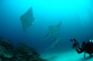 Manta 8 Diver